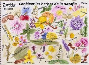 Coneixer_les_herbes_de_la_ratafia