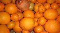 El nostre companyXavidel País Valencià, productor de tarongesbio, ha vingutal Casal eldissabte 19 de novembreper presentar els seus productes ecològics de la Valldigna: taronges, mandarines, llimones, alvocats, mel, pol·len, melmelades, […]
