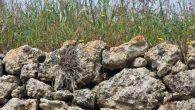 Vals de la Pedra Seca