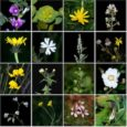 L'amic Albert Mallol, botànic de renom i membre del Casal, nos ha adreçat aquesta làmines amb 200 plantes que vol compartir amb tota la gent interessada. Moltes gràcies a ell! […]