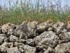 Pedra_seca_2017_12